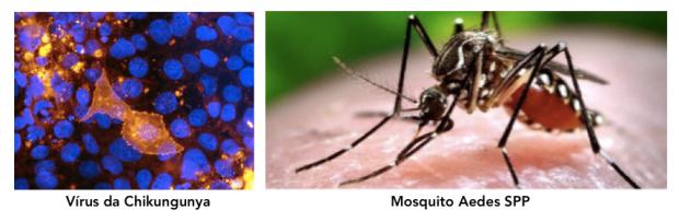 chikungunya2