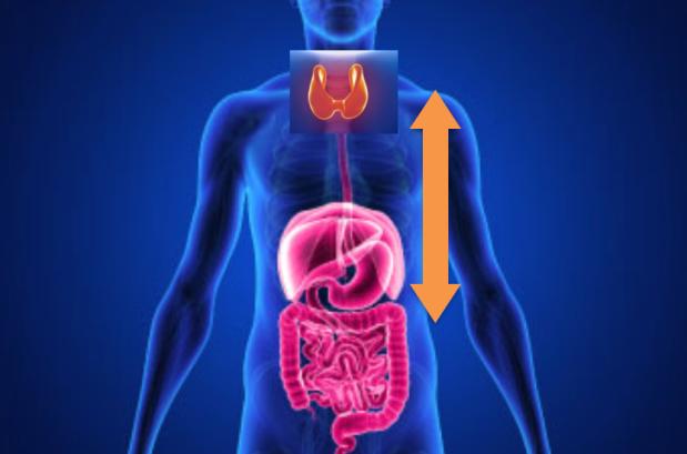 Hipotireoidismo tireoide 3
