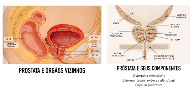 Saude da Prostata 5