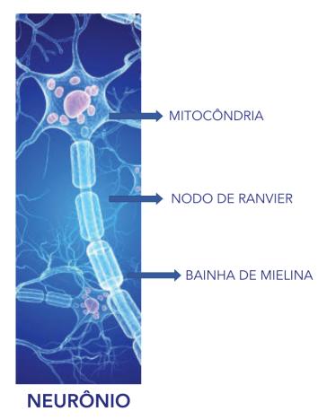 Esclerose Multipla 2